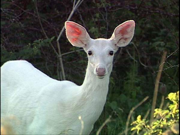 School Shootings: the Story of the White Deer